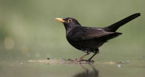 'The wonder even of small, local and daily life – a blackbird's song, a friend's greeting, a hot meal – these things can be an antidote to despair,' says environmentalist and author Patrick Curry. Photograph: Getty Images