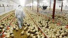 A Cavan chicken farmer is suing the Revenue Commissioners for damages.