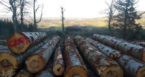 Coillte harvests and sells timber and, through its Medite Smartply subsidiary, wood building products