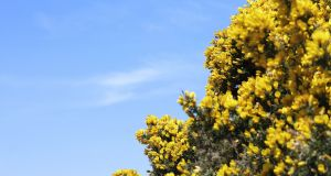 'I felt like an ejit standing there with the gorse hedge clippers in my hand.'