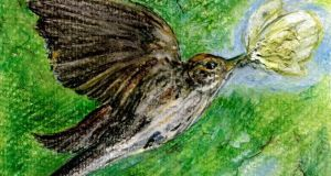 The spotted flycatcher. Illustration: Michael Viney