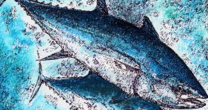 The spawning grounds of bluefin tuna are under threat as the USA's National Marine Fisheries Service plans to open them up to pelagic longline fishing. Illustration: Michael Viney