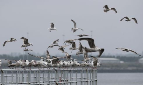 TAKING FLIGHT: Gulls on the Pigeon House Road in Ringsend, Dublin. Photograph: Nick Bradshaw/The Irish Times