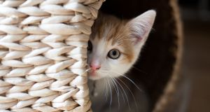 'As rationality slowly kicked in, it occurred to me that the furball slumbering on the three-ply quilted rolls might actually be the cat.' Photograph: iStock