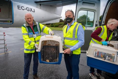 Eamonn Meskell, regional manager National Parks and Wildlife Service, Howard Joanes of Kerry Airport and Dr Allan Mee, eagle project co-ordinator, with white-tailed eagles, brought to Kerry airport as part of a national programme to reintroduce the birds of prey to Ireland. Photograph: Domnick Walsh/EyeFocus LTD