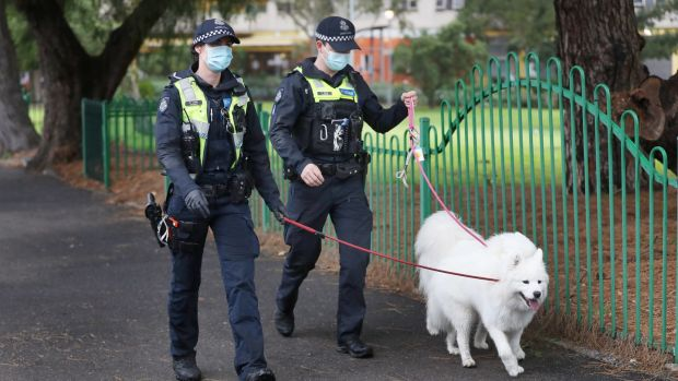 Police walk dogs belonging to residents of public housing under tight lockdown over in north Melbourne. Photograph: David Crosling/Australia and New Zealand Out/EPA