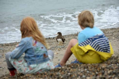 AT SWIM ONE BIRD: Florence and Sabastian Murray watch a brown booby on Greystones Beach, Co Wicklow. Photograph: Dara Mac Dónaill/The Irish Times