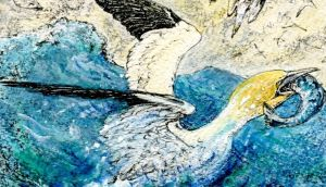 Gannet with fish: Anyone who has watched the birds plunging vertically from the sky to seize mackerel deep beneath the surface must marvel at their anatomy. Illustration: Michael Viney