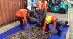 Officials sort seized pangolin scales at a port in southern Vietnam's Ba Ria Vung Tau province in May 2019. Photograph: Vietnam News Agency/AFP