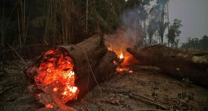 A file photograph shows tree trunk burning in the Amazon rainforest, near Abuna, Rondonia state, Brazil. Photograph: CARL DE SOUZA/AFP via Getty Images
