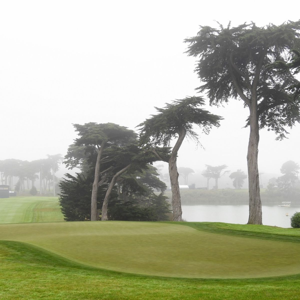 Harding Park The Municipal Course You Can Play For 50