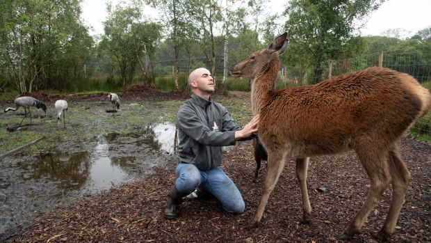 Killian McLaughlin with Fia the red deer in the Wild Ireland Sanctuary in Burnfoot, Co Donegal. Photograph: Joe Dunne