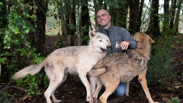 Killian McLaughlin with his wolves, Oisin and Finn (R), in the Wild Ireland Sanctuary in Burnfoot, Co Donegal. Photograph: Joe Dunne
