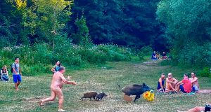A naked sunbather chases a wild boar that stole his laptop at Teufelsee lake in Berlin. Photograph: Adele Landauer/AFP/Getty Images