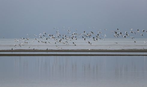 LORDS OF ALL THEY SURVEY: Sea birds mid-flight at low tide in Sandymount, Dublin. Photograph Nick Bradshaw