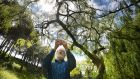 Paddy Woodworth using the Seek app on his phone in Dublin's Phoenix Park to identify items found in nature from trees, flowers, shrubs to animals. Photograph: Alan Betson