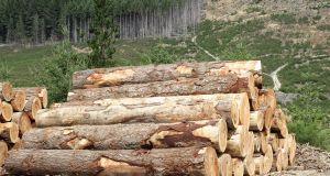 The price of timber likely to increase 6-8 per cent in September, it has been predicted. Photograph: iStock