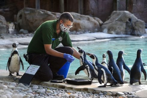Keeper Martin Franklin weighs humboldt penguins during the annual weigh-in at ZSL London Zoo, London. Photograph: Kirsty O'Connor/PA Wire