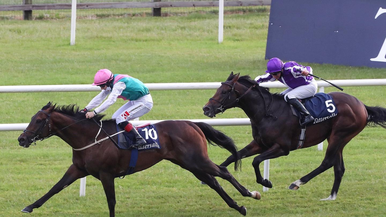 Irish 2000 guineas betting 2021 ford sports betting simulator app