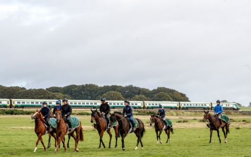 HORSING AROUND: A view of horses out during a visit to Johnny Murtagh's yard ahead of the Longines Irish Champions Weekend. Photograph: James Crombie/Inpho