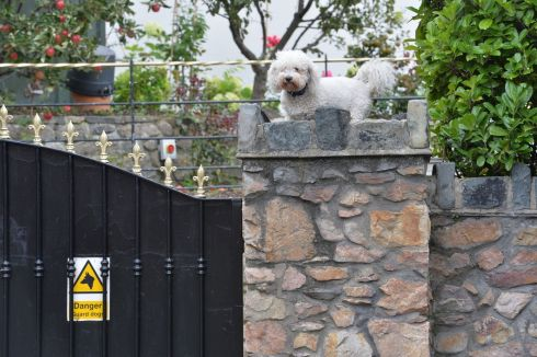 A guard dog on patrol at Shelbourne Road, in Dublin. Photograph: Alan Betson/The Irish Times