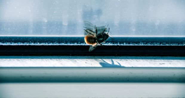 Michael Harding: 'I mourn all the dead, but nowadays I mourn the bees as well.' Photograph: iStock