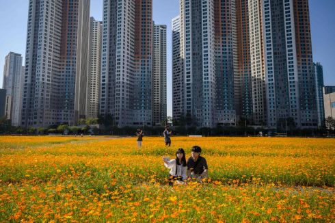 DOWN TO EARTH: A couple pose for photos among a field of cosmos flowers in front of high-rise apartment buildings in Goyang, west of Seoul, South Korea. Photograph: Ed Jones/AFP/Getty