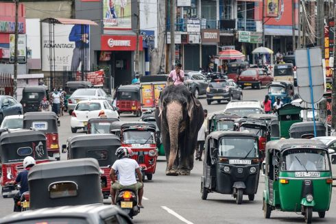 BECAUSE HE CAN: A mahout rides an elephant among traffic in Piliyandala, a suburb of Sri Lanka's capital, Colombo. Photograph: Lakruwan Wanniarachchi/AFP/Getty