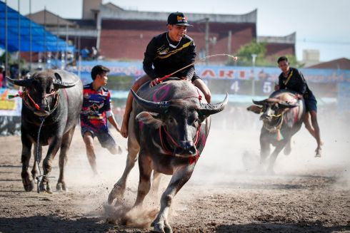 CAREFUL NOW: Thai jockeys compete in the annual water buffalo races in Chonburi province, Thailand. Photograph: Diego Azubel/EPA