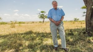 David Attenborough: 'We have come this far because we are the smartest creatures that have ever lived. But to continue we require more than intelligence. We require wisdom'