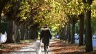 AUTUMN LEAVES: A woman walks her dog on Griffith Avenue in Dublin. Photograph: Dara Mac Dónaill/The Irish Times