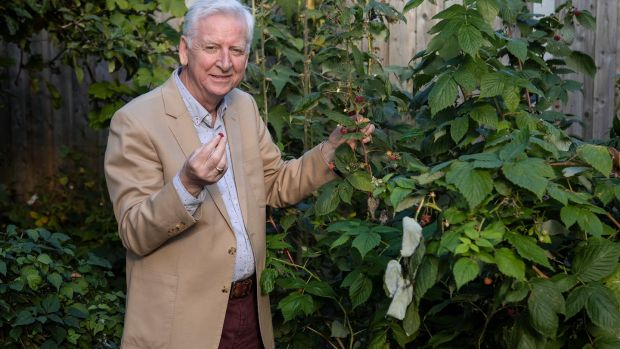 Owen Connolly pictured beside his raspberries plants in his garden in Dundrum. Picture credit; Damien Eagers 14/10/2020