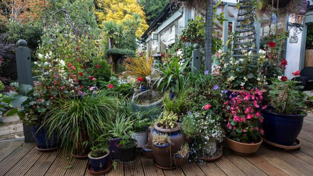 Owen Connolly's garden in Dundrum. Picture credit; Damien Eagers 14/10/2020