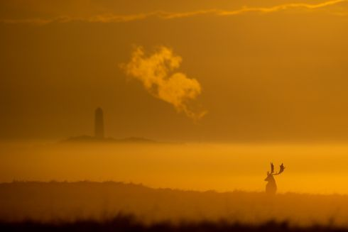 EMPIRE OF THE SUNSET: A lone stag at sunrise in the Phoenix Park, Dublin, as the annual rut comes to its peak. Photograph: Naoise Culhane