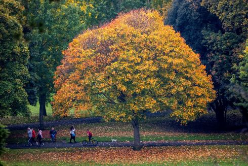 GOLDEN YEARS: Autumn in the War Memorial Gardens, Islandbridge, Dublin. Photograph: Tom Honan