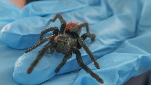 Surprised Donegal shopper discovers stowaway tarantula