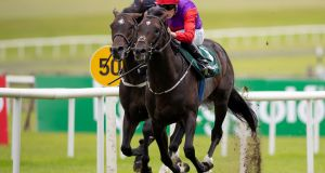Romanised is set to travel to Hong Kong in December. Photograph: Morgan Treacy/Inpho