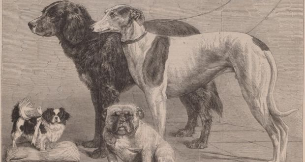 Prize Dogs at the Dublin Dog Show, an image of the first dog show in 1864, from the Illustrated London News. Image courtesy of the Board of Trinity College Dublin