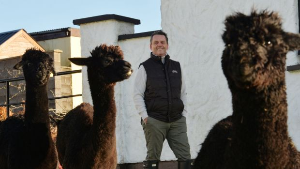 13/11/2020 - NEWS - Aengus MacGrianna photographd at his home in Clonalvy, Co. Meath with his Alpacas.for the MagazinePhotograph: Alan Betson / The Irish Times