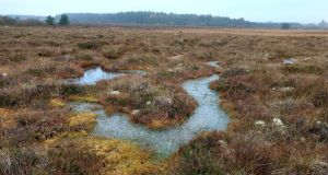 Carrowbehy Bog SAC in Co Roscommon is one of Ireland's wettest and most important raised bogs. Photograph courtesy Ronan Casey/The Living Bog