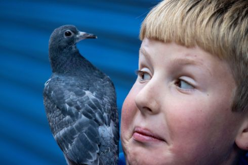 TAKE IT EASY, LAD: Alexander Andrusiewicz (10) from Poland with a pigeon on his shoulder. Photograph: Tom Honan
