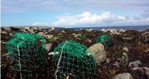 Supporting sustainable local seaweed businesses this Christmas