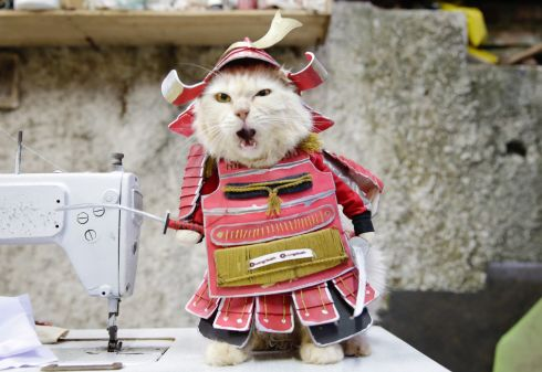 A cat clad in traditional samurai costume made by cat tailor Fredi Lugina Priadim in a workshop in Bogor, Indonesia. The 39-year-old tailor supplies outfits to pet owners who look to dress their cats in elaborate garb. Photograph: EPA