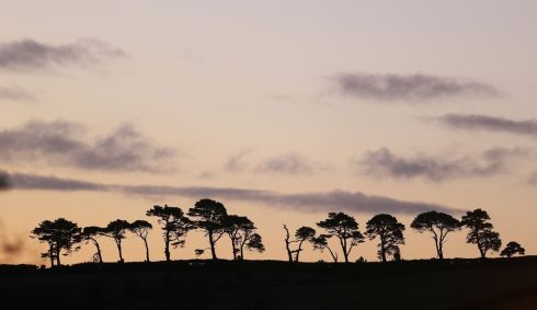 Trees silhouetted as the sun rises on New year's eve on the east coast in Wicklow.  Photograph: Nick Bradshaw / The Irish Times