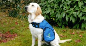 New arrangements for bringing pets and assistance dogs to Northern Ireland from Great Britain are in effect following the end of the Brexit transition period on January 1st.