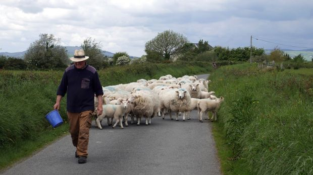 Cushendale's Irish wool comes from two flocks of native Galway sheep, one from farmer Gordon Hall (pictured) in Wexford and the other in Sligo.