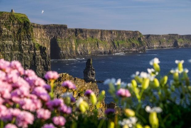 8.21pm, May 22nd: O'Brien's Tower can be seen in the top left with sea pink and sea campion flowers in the foreground. It is a round stone tower near the midpoint of the cliffs, built in 1835 by Sir Cornelius O'Brien to capture the view of the cliffs