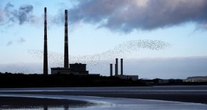 FLOCK FACTOR: A flock of seabirds in flight above Sandymount strand in Dublin. Photograph: Laura Hutton/The Irish Times