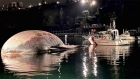 Calf leads coastguard to dead whale off Naples
