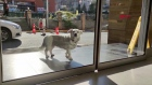 Dog waits for owner for a week outside hospital